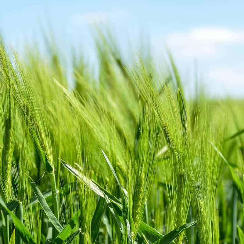 Complex Web App Development for Agricultural Company