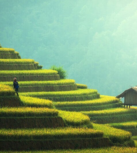 agricultural-thumbnail-1-1-1-1